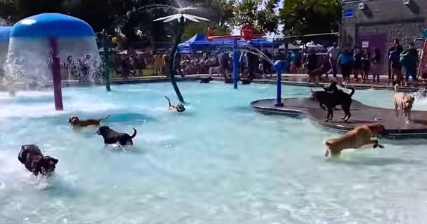 Once A Year This Swimming Pool Actually Holds A Water Park For Dogs